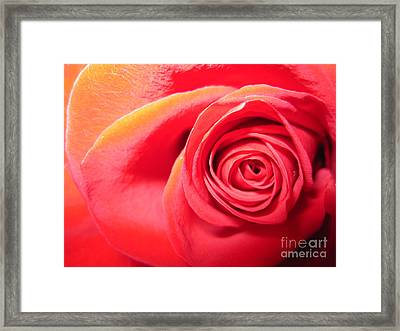 Luminous Red Rose 1 Framed Print