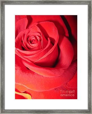 Luminous Red Rose 6 Framed Print