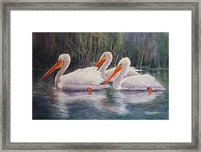 Luminous White Pelicans Framed Print by Roxanne Tobaison