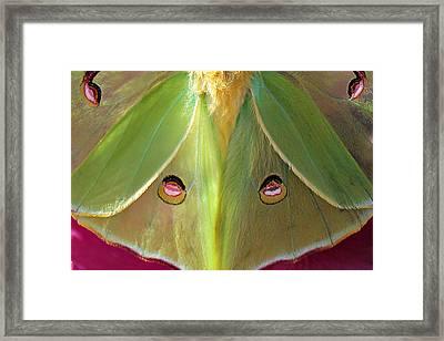 Luna Eyes Framed Print by Leslie Kirk