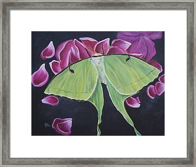 Luna Moth Framed Print by Jaime Haney