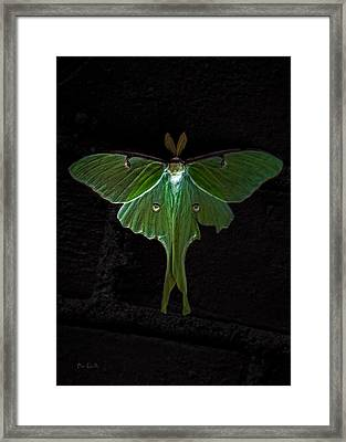 Lunar Moth Framed Print by Bob Orsillo