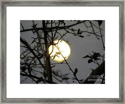 Lunar Still Life 2 Framed Print by Laura Yamada