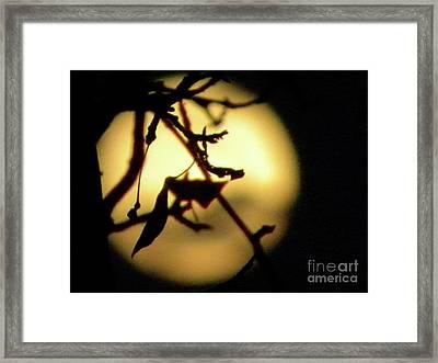 Lunar Still Life Framed Print by Laura Yamada