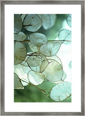 Lunaria Money Plant Framed Print