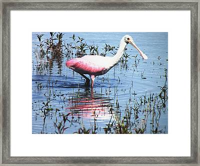 Lunch At The Lake Framed Print by Will Boutin Photos