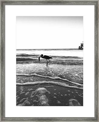 Lunch At The Pier Framed Print by Jean Marie Maggi