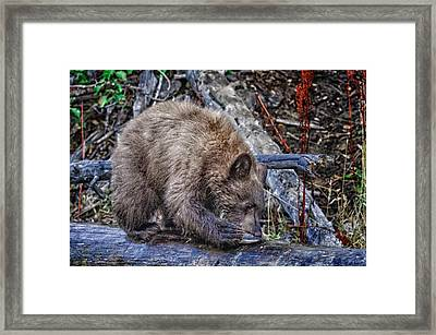 Framed Print featuring the photograph Lunch Break by Jim Thompson