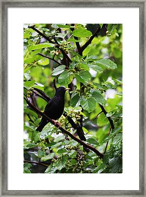 Lunch In The Rain Framed Print by Vadim Levin