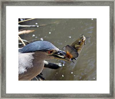 Lunch Is Served Framed Print by Shoal Hollingsworth