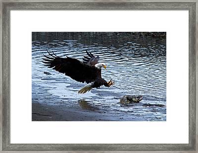 Lunch Landing Framed Print