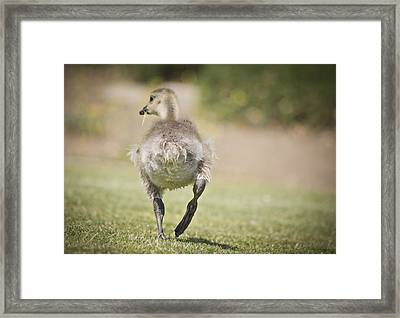Framed Print featuring the photograph Lunch On The Run by Priya Ghose