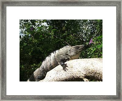 Framed Print featuring the photograph Lunch by Paul Foutz