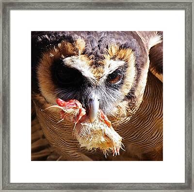 Lunch Framed Print by Paulette Thomas