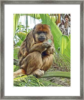Lunch Time - Santa Ana Zoo Framed Print