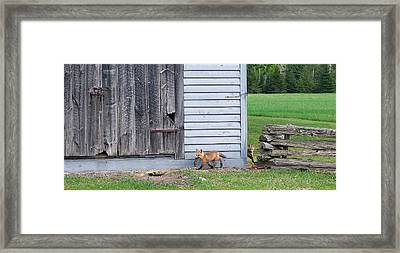 Lunch Time Framed Print by Bill Morgenstern
