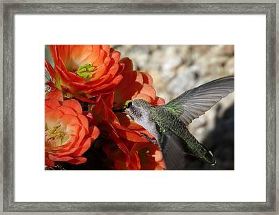 Lunch Time Framed Print by Cindy McDaniel