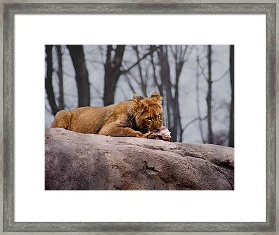 Framed Print featuring the photograph Lunch Time by Courtney Webster