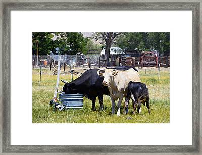 Lunch Time In The Pasture Framed Print by Barbara Snyder
