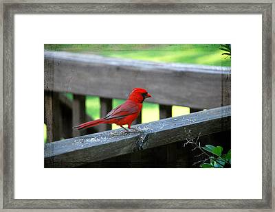 Lunch Time Framed Print by Linda Segerson