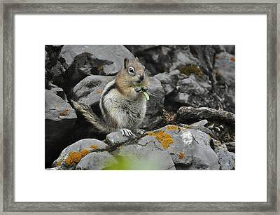 Framed Print featuring the photograph Lunch Time by Sandy Molinaro