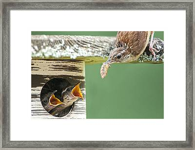 Lunchtime At The Wren Household Framed Print by Bonnie Barry