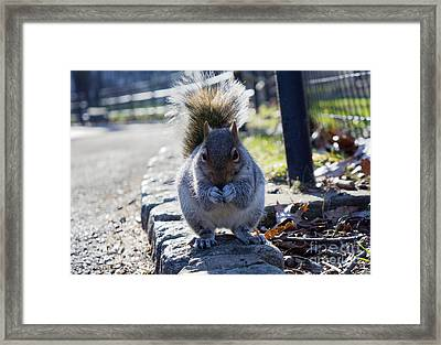 Lunchtime For Central Park Squirrel Framed Print