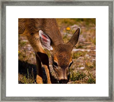 Lunchtime In The Forest Framed Print by Jordan Blackstone
