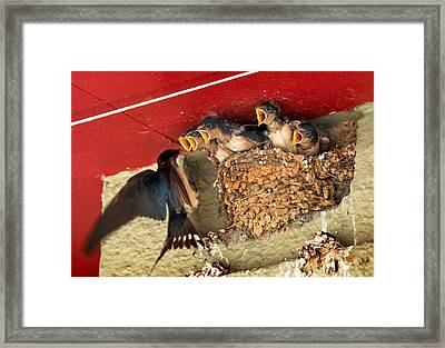 Lunchtime Framed Print by Jim Painter