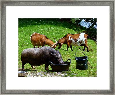 Lunchtime Framed Print by Rona Black