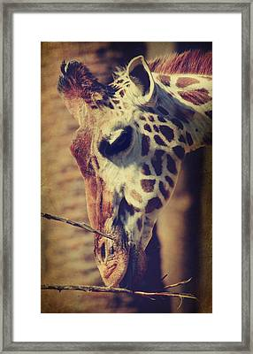 Lunchtime Twigs Framed Print by Laurie Search