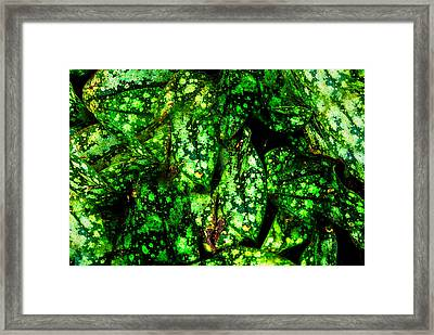 Lungwort Leaves Abstract Framed Print by  Onyonet  Photo Studios