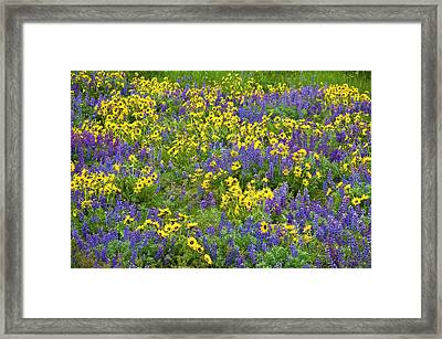Lupine And Balsamroot, Dalles Mountain Framed Print by Greg Vaughn