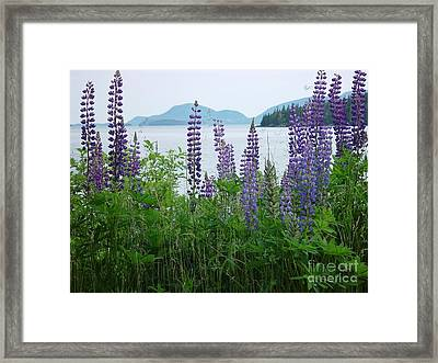 Lupine At Sorrento Framed Print by Christopher Mace