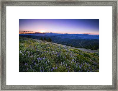 Lupine Bloom In Idaho Mountains Framed Print