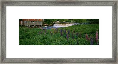 Lupine Flowers In A Field, Petite Framed Print