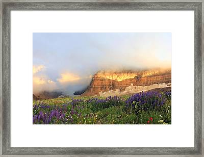 Lupine Wildflowers On Mount Timpanogos Framed Print