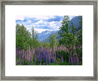 Lupines And Mountains Framed Print