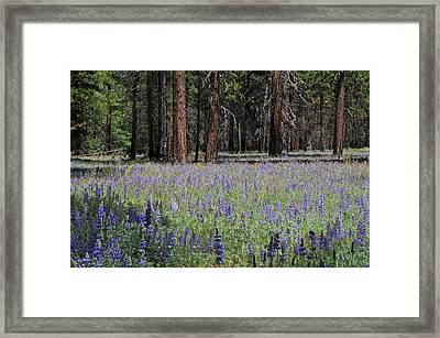 Framed Print featuring the photograph Lupines In Yosemite Valley by Lynn Bauer