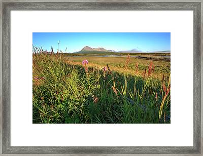 Lupines View From Camp Mcneil River Framed Print by Tom Norring
