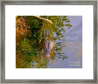 Lurking Framed Print by Carey Chen