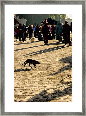 Lurking Cat In The Jemaa El Fna Square Marakesh Framed Print by David Smith