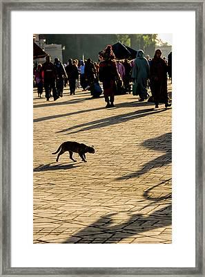 Lurking Cat In The Jemaa El Fna Square Marakesh Framed Print