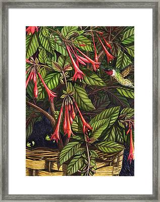 Lurking Framed Print by Catherine G McElroy