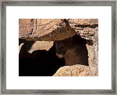 Lurking In The Shadows Framed Print