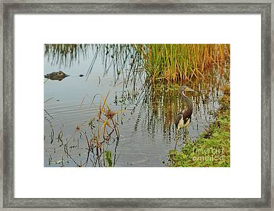 Lurking Framed Print by Lynda Dawson-Youngclaus