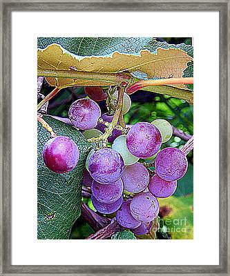 Luscious Grapes In New Orleans Louisiana Framed Print