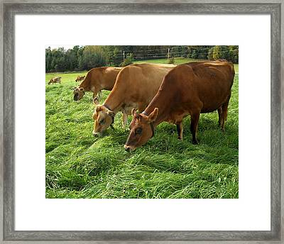 Luscious Grass For Delicious Milk Framed Print