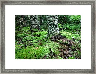 Lush Forest Framed Print by Alan Russo