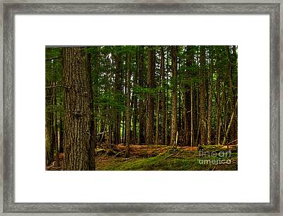Lush Green Forest Framed Print